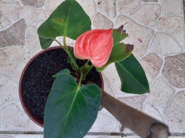 Vendo mudas de plantas ?? - Foto 4