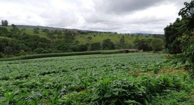 Seu tão sonhado de ter seu investimento rural acabou de chegar para tornar realidade? - Foto 2