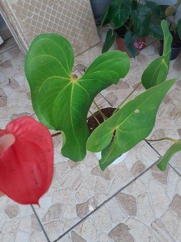 Vendo mudas de plantas ?? - Foto 6