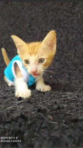 Doação de dois gatinhos machos  - Foto 4