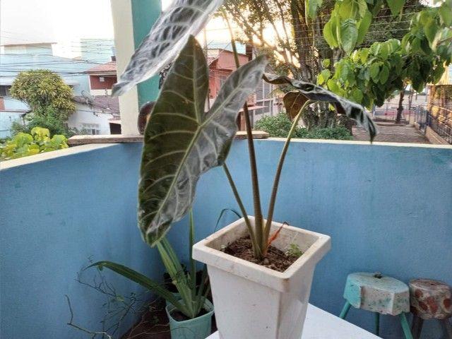Plantas suculentas - Foto 4