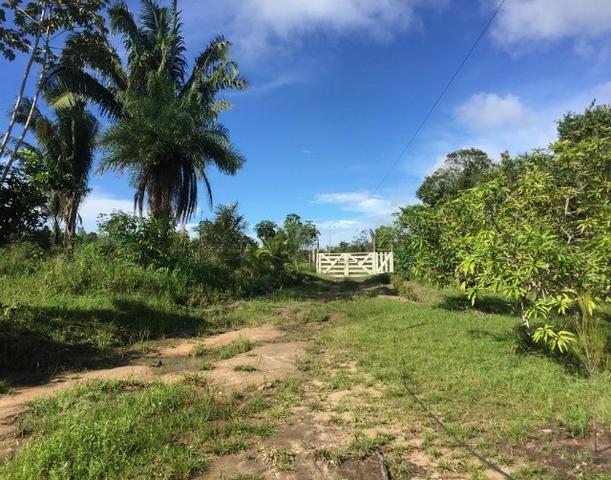 Vendo Sitio no Município de Santo Antonio do Tauá - Foto 15