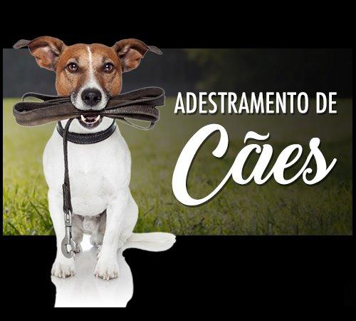 Resultado de imagem para adestramento de cães
