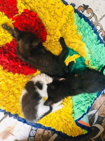 Estou doando esses três filhotes de gato