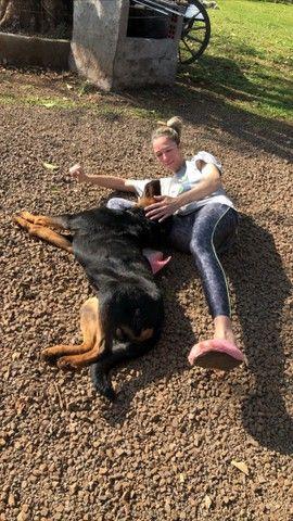 Cruza Rottweiler  - Foto 2