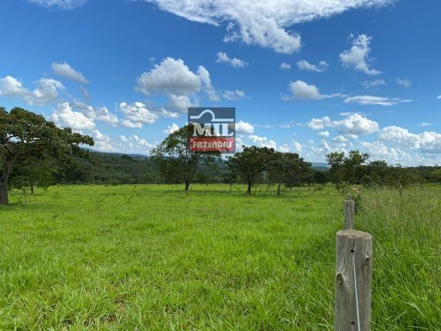 Fazenda 25 Alqueires ( 121ha) Hidrolândia-GO - Foto 15