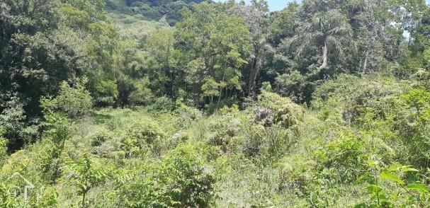 Chácara à venda em Zona rural, Santa maria cod:10004 - Foto 12