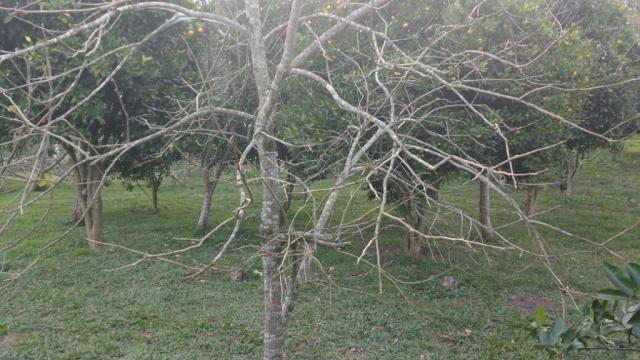 Sítio rural à venda, zona rural, quitandinha. - Foto 17