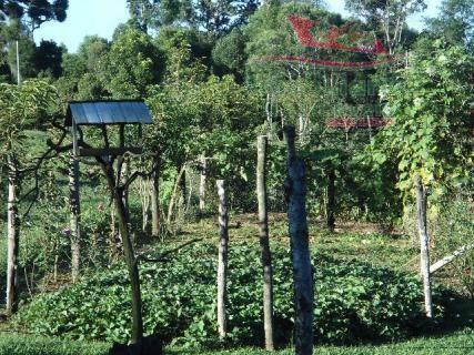 Chácara rural à venda, campo largo da roseira, são josé dos pinhais - ch0026. - Foto 16