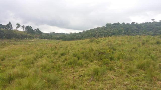 Área à venda, 103000 m² por r$ 700.000,00 - borda do campo - são josé dos pinhais/pr - Foto 10