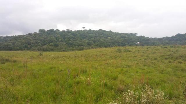 Área à venda, 103000 m² por r$ 700.000,00 - borda do campo - são josé dos pinhais/pr - Foto 9