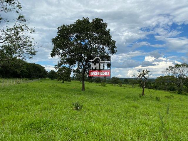 Fazenda 25 Alqueires ( 121ha) Hidrolândia-GO - Foto 17