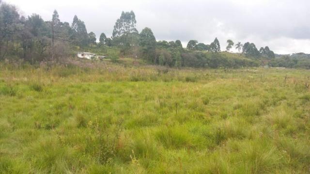 Área à venda, 103000 m² por r$ 700.000,00 - borda do campo - são josé dos pinhais/pr - Foto 6