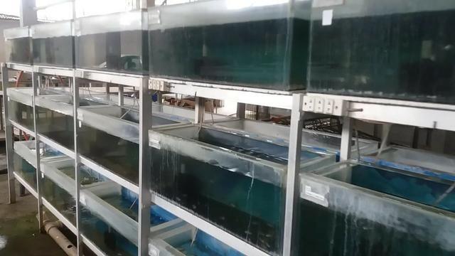 Estante em alumínio com 30 aquários ( 70 litros ) - Foto 2