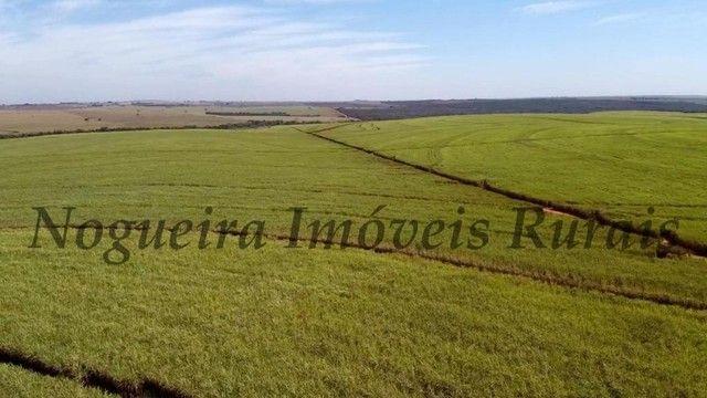 Fazenda com 857 Hectares, plantado cana, não esta arrendado (Nogueira Imóveis Rurais) - Foto 2