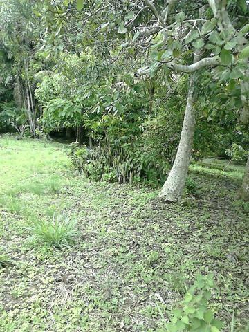 Colônia 16 hectares ! vendo ou troco por casa em Rio Branco !