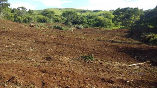 Fazenda à venda, 2541000 m² por r$ 3.675.000 - fazenda velha - nova laranjeiras/pr - Foto 11