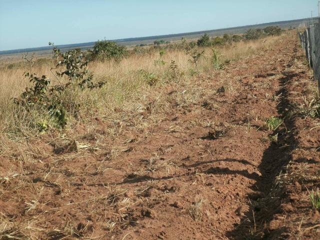 3200 Hectares,Pecuária,Lavoura,Frutífera,Faço Permuta,Conquista Doeste-MT, - Foto 10