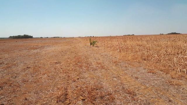 Fazenda de 462 Ha , 300 Ha Lavoura . Redenção - PA .permuta 70% em Fazenda no Paraná - Foto 13
