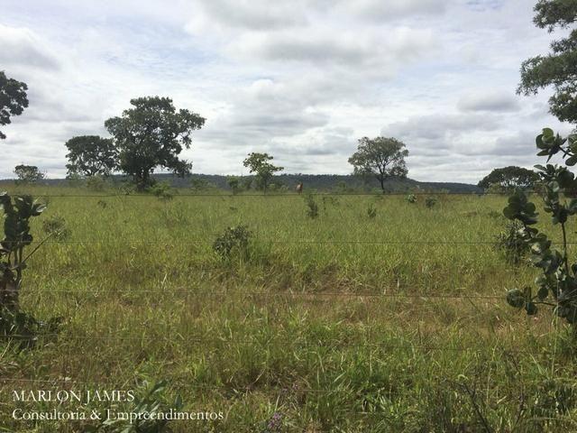 Fazenda no Município de Ipameri-Go - Foto 16