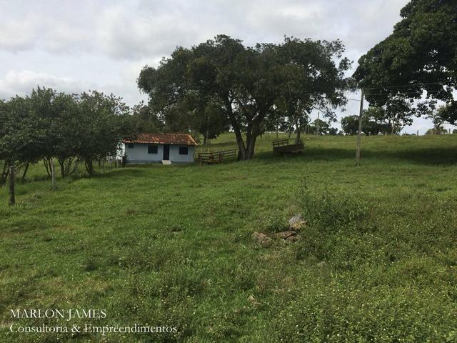 Fazenda no Município de Ipameri-Go - Foto 7