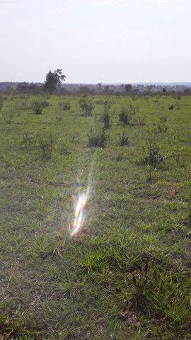 Fazenda em amambaí - Foto 4