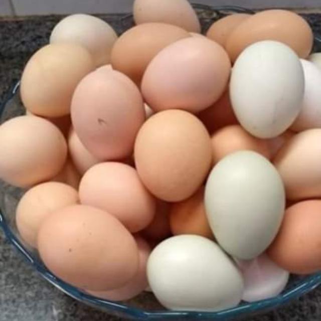 Ovos Caipira - Foto 2