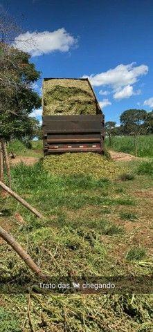 Silagem de abacaxi - Foto 2