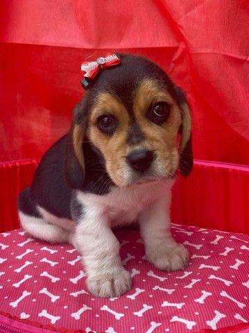 Beagle lindos filhotes - Foto 2