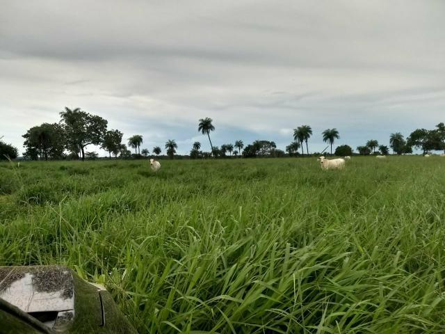 Fazenda 150 Alqueires Gurupi para Duere