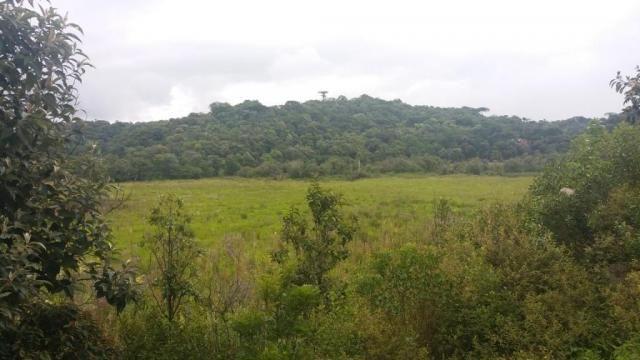 Área à venda, 103000 m² por r$ 700.000,00 - borda do campo - são josé dos pinhais/pr - Foto 7