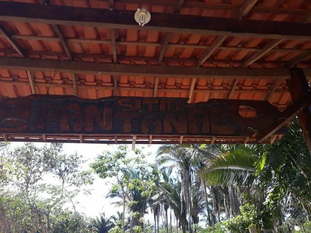Vende-se Sítio (as margens do riacho gameleira) - Foto 4