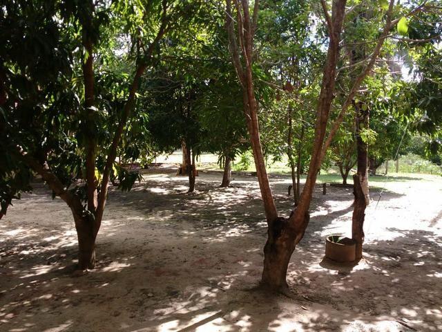 Vende-se Sítio (as margens do riacho gameleira) - Foto 5