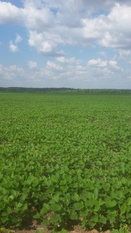 Fazenda de 462 Ha , 300 Ha Lavoura . Redenção - PA .permuta 70% em Fazenda no Paraná - Foto 2