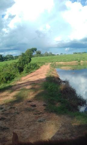 Área de Terra com 75 hectares - Foto 4