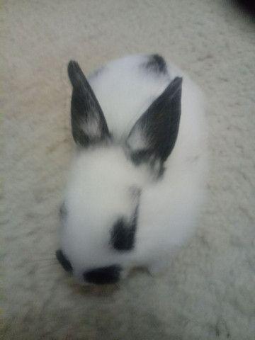 Vendo filhote coelhos