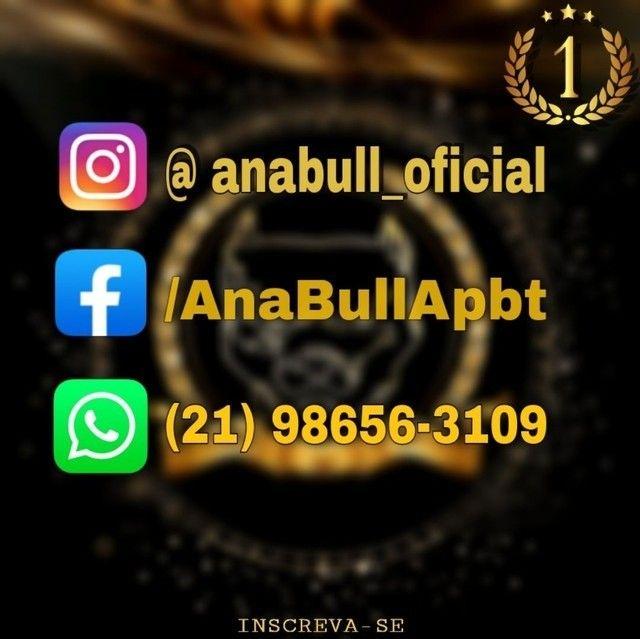 Canil AnaBull Recebe VC de P.A.T.A.S Abertas Filhotes Disponíveis - Pitbull - Foto 5