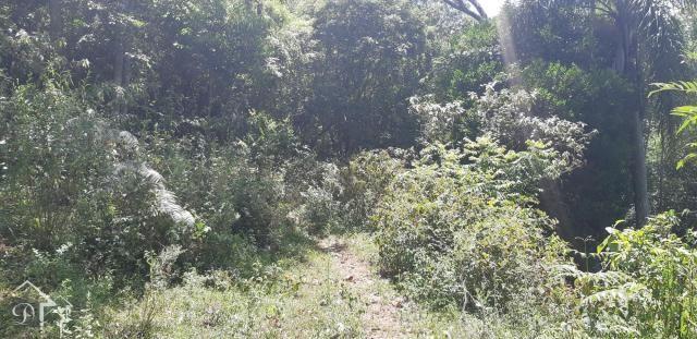 Chácara à venda em Zona rural, Santa maria cod:10004 - Foto 9