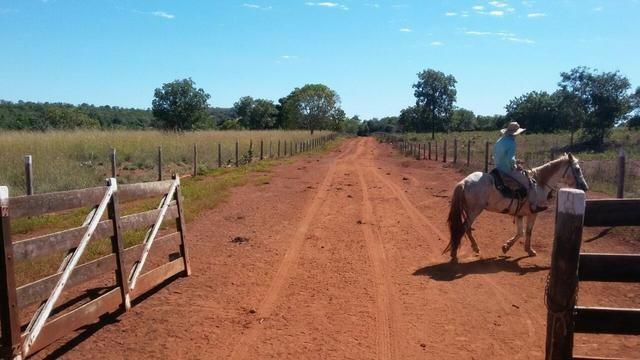 Fazenda Município de Palmeirópolis ? TO, com 763,27 hectares!