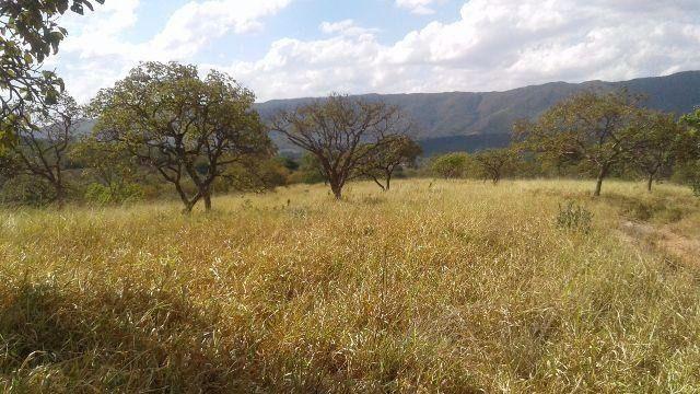Fazenda 63 ha onça de pitangui - Foto 3