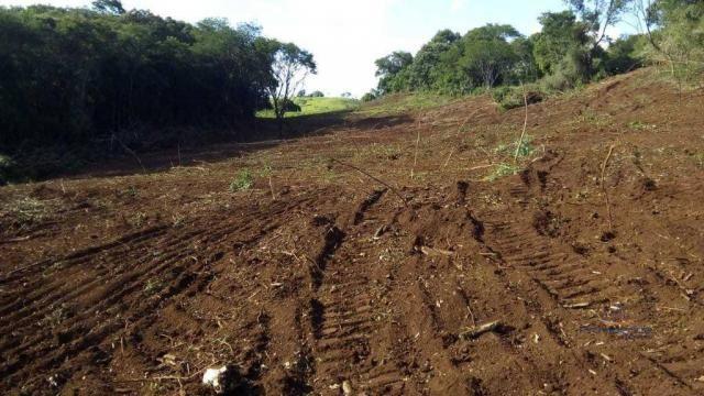 Fazenda à venda, 2541000 m² por r$ 3.675.000 - fazenda velha - nova laranjeiras/pr - Foto 6