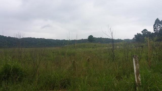 Área à venda, 103000 m² por r$ 700.000,00 - borda do campo - são josé dos pinhais/pr - Foto 13