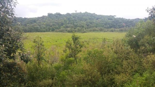 Área à venda, 103000 m² por r$ 700.000,00 - borda do campo - são josé dos pinhais/pr - Foto 12