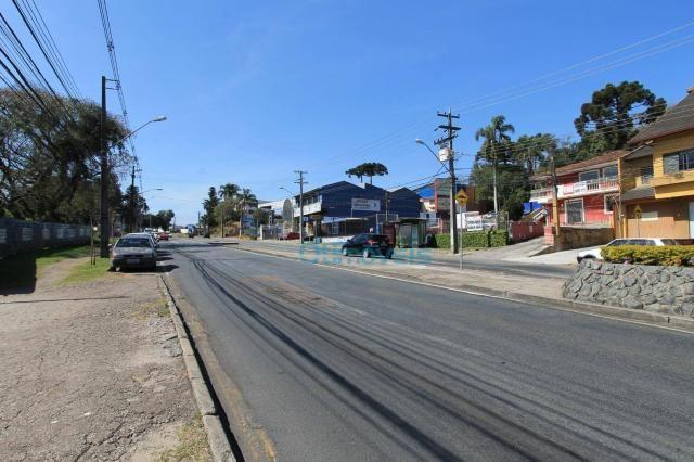 Terreno comercial na avenida manoel ribas - Foto 4