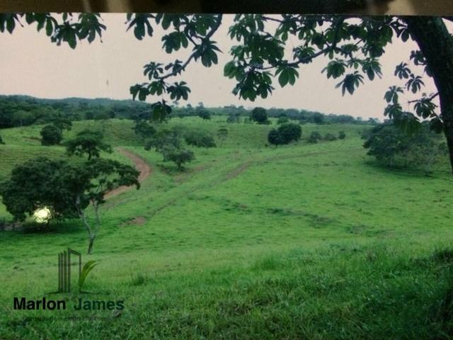 Fazenda em Santa Cruz de Goiás! - Foto 3