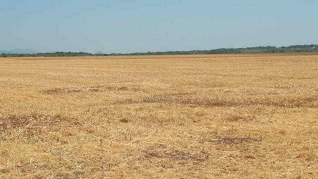 Fazenda de 462 Ha , 300 Ha Lavoura . Redenção - PA .permuta 70% em Fazenda no Paraná - Foto 9