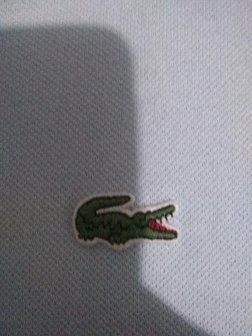 d81e4d62c1e54 Camiseta polo Lacoste original - Roupas e calçados - Santa Teresinha ...