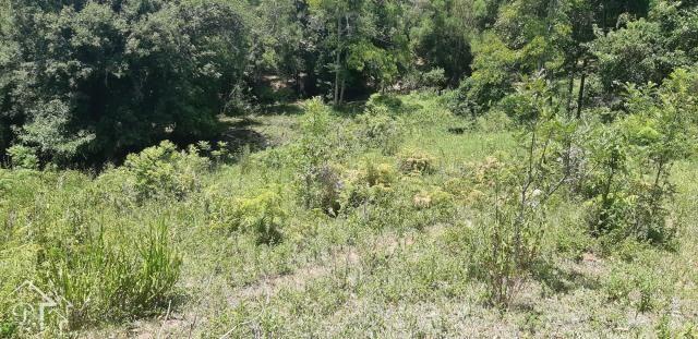 Chácara à venda em Zona rural, Santa maria cod:10004 - Foto 7