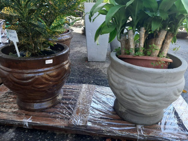 Vasos variados de cimento para plantas