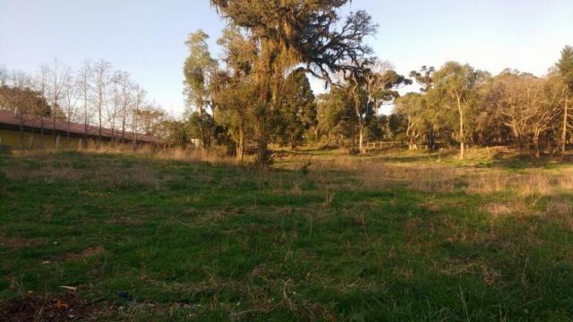 Sítio rural à venda, zona rural, quitandinha. - Foto 16